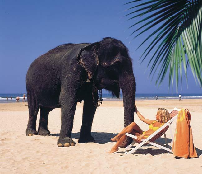 Гаряча Шрі Ланка за 6100грн. на 10днів!