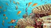 Египет: Сочетание экзотики, моря, солнца и приятных цен