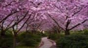 Весняне Закарпаття + Нарциси (3 дні)!