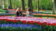 I♥Amsterdam ! Нідерланди зачарують красою...
