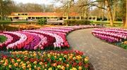 Мои ГОЛЛАНДСКИЕ тюльпанчики! Невероятный королевский парк цветов Кейкенкоф - это то, что стоит увидеть собственными глазами ...