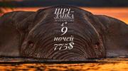 Шрі-Ланка! Виліт 8.11 на 9 ночей