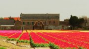 Незабываемые Нидерланды