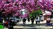 Термальное Закарпатье + цветения сакуры