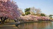 Термальное Закарпатья + цветения сакуры
