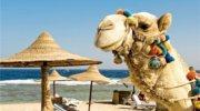 Горячая цена в Египет 11 ночей на море
