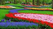 Тур в Королевский парк цветов Койкенхоф - 5 дней по 3820 грн / чел