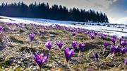 ТУРИ в ЗАКАРПАТТЯ на ТРАВНЕВІ СВЯТА: Долина Нарцисів – оз Синевир – Алея Сакур – в одному турі !!