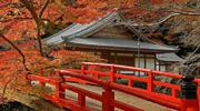 Осінь в Японії ! авіа із Києва