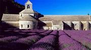 Лавандовий тур в Прованс