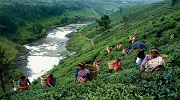 Перлина Шрі-Ланки