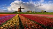 Еще есть места на День короля в Нидерландах