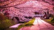 ЗАКАРПАТЬЕ + цветение сакуры