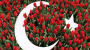 Не пропусти найцвітніше дійство Стамбула Фестиваль тюльпанів