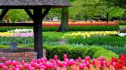 Поспішай на чудові тюльпани у парку Кекенхоф
