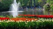 Туры с парком Кейкенхоф (голландские тюльпаны)