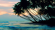Шри-Ланка с прямого перелета!