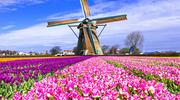 Невероятный Королевский парк Кёкенхоф! + Амстердам!