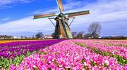 Невероятный Королевский парк Кёкенхоф! + Амстердам!  Вкус свободы!
