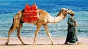 Гарячий Єгипет! Хургада!