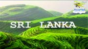 Гаряча Шрі-Ланка! Прямий переліт!