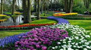 На тюльпанчики в Амстердам! парк Кекенхоф!