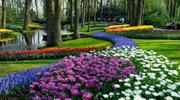 Тури в Нідерланди в парк квітів Кекенхоф! 3900 грн!
