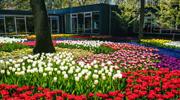 Скоро зацветут тюльпанчики! В Амстердаме! Не упусти!