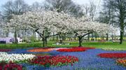 Туры в парк цветов Кекенхоф в Нидерландах! Выбирайте дату и отправляйтесь на парад цветов!