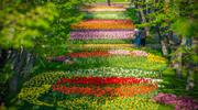 Амстердам и Брюссель! парк тюльпанов Койкенхоф!