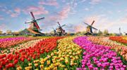 Туры в Нидерланды в парк цветов Кекенхоф!