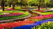Амстердам та Брюссель! Парк тюльпанів Кекенхоф!