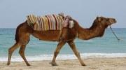 Тунис ... Раннее бронирование (страхование от невыезда в цене тура)