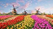 Миг счастья в Амстердаме