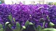 Ковток свободи в Амстердамі + Парк квітів Кекенхоф !Всього 6203 грн ! Без нічних переїздів!