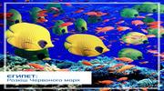 ЄГИПЕТ: Розкіш Червоного моря