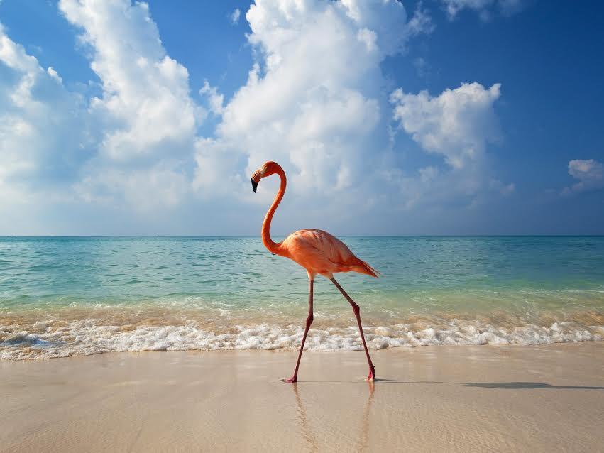 Райський відпочинок в Домінікані
