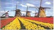 Скорее бронируй автобусный тур в Нидерланды!