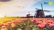 Отправляемся в Нидерланды в сезон цветения тюльпанов!