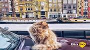 Для вас подборка туров на  День Короля Нидерландов, выбирайте