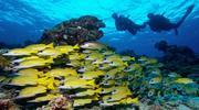 Завораживающие Мальдивы - эксклюзивный тур!