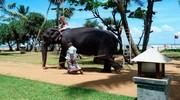 Шрі- Ланка Супер ціна  Регіон :Калутара