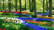 """Парад цветов """"Energy"""" в Голландии!"""