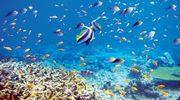 КЛАССНОЕ ПРЕДЛОЖЕНИЕ: ОТДЫХ В ОТЕЛЕ 5*  BRAYKA ROYAL BEACH 5*  НА системе- ВСЕ ВКЛЮЧЕНО