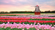 Туры в Нидерланды в парк цветов Кекенхоф