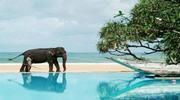 # Шри_Ланка - это именно то, что тебе нужно!