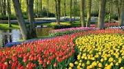 Тур в Парк тюльпанов в Амстердаме!