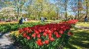 Голландский шарм и Парк тюльпанов