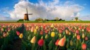 Гарячий Тур в Амстердам у парк тюльпанів