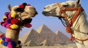 На Новий рік у Єгипет всього 8000грн!
